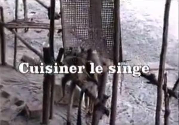 cusiner singe