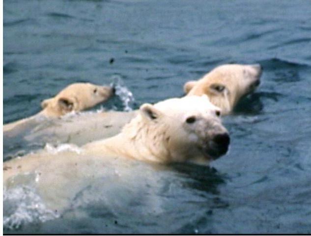 ourses et petits